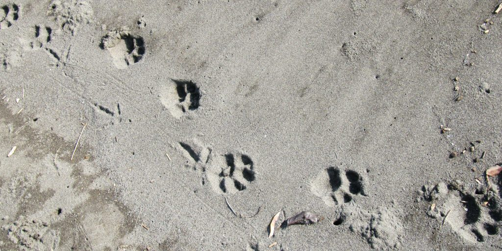 Green footprints represent sustainable lifestyles.