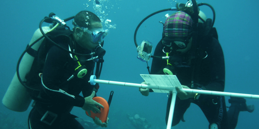 Spend a gap year on a marine biology program.