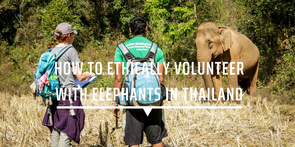 volunteer ethically elephants