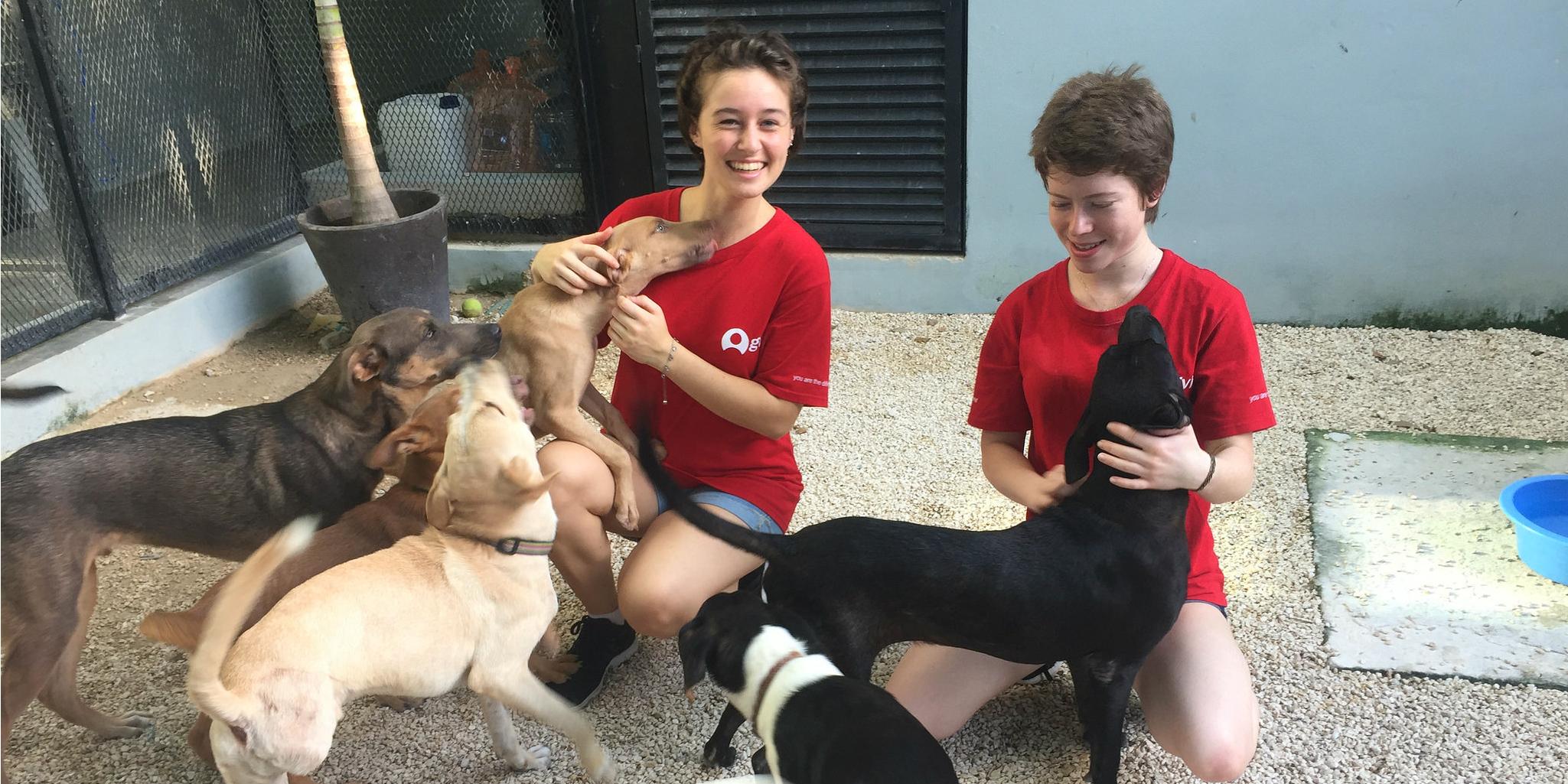 volunteer with animals