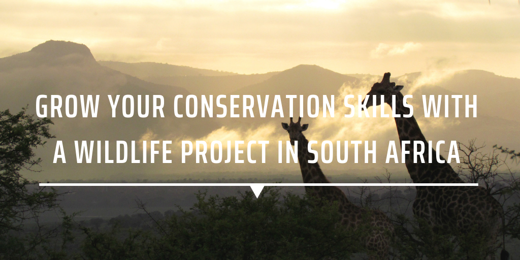 what is wildlife conservation