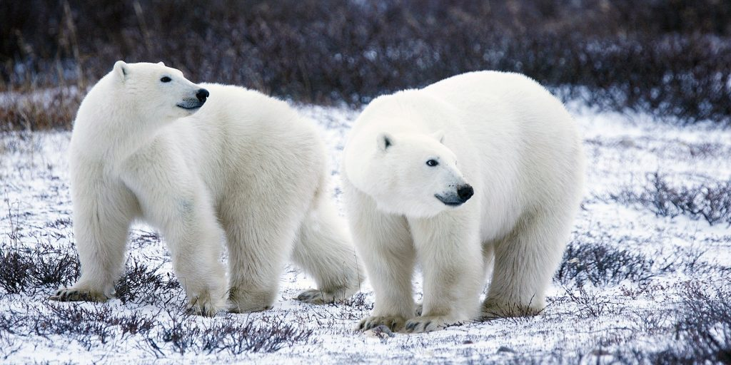 support wildlife conservation in North America with Defenders of Wildlife