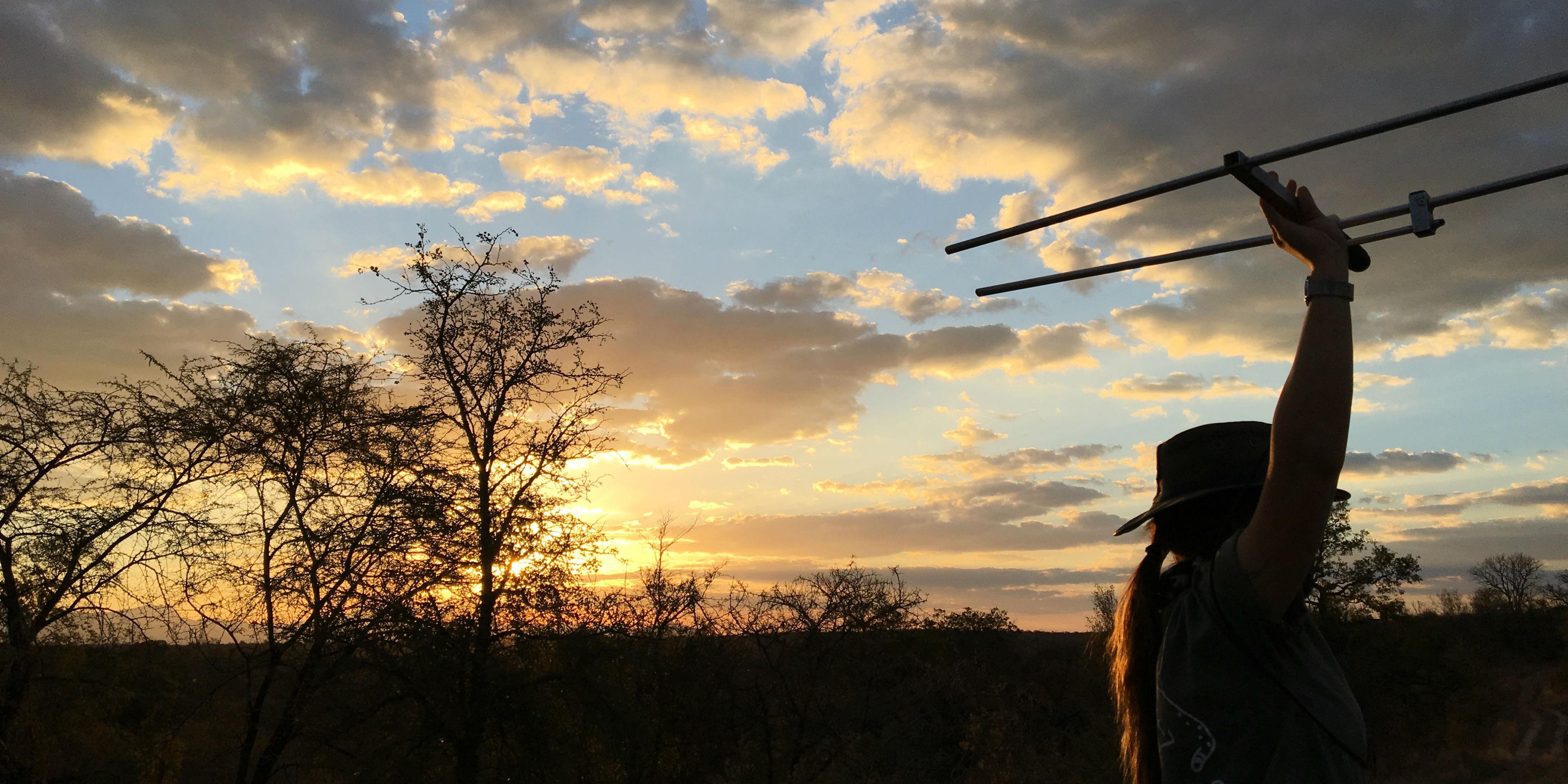 volunteer south africa wildlife