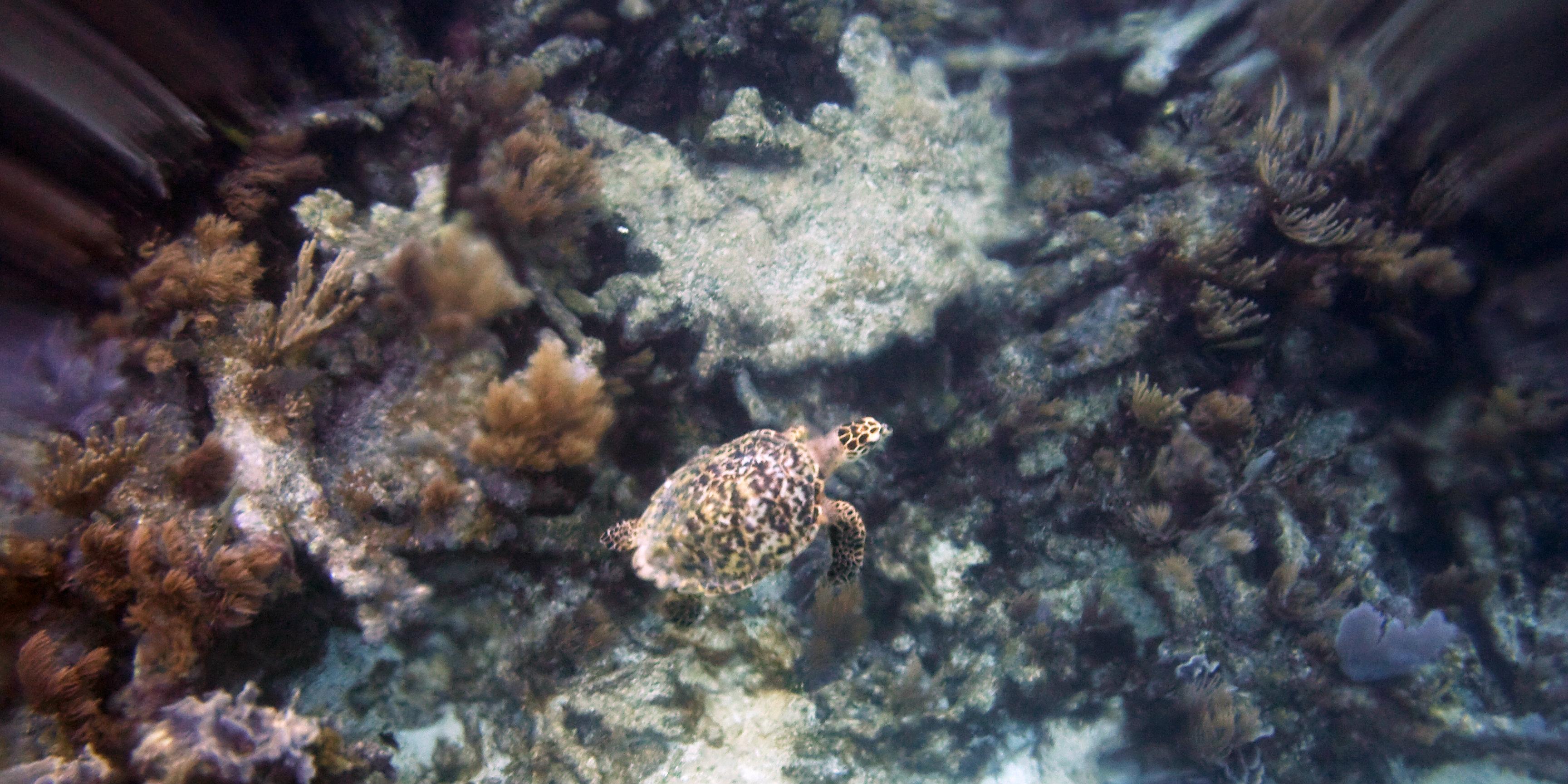 Volunteering in marine conservation