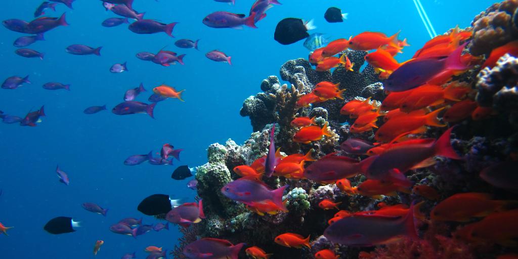 best diving destinations