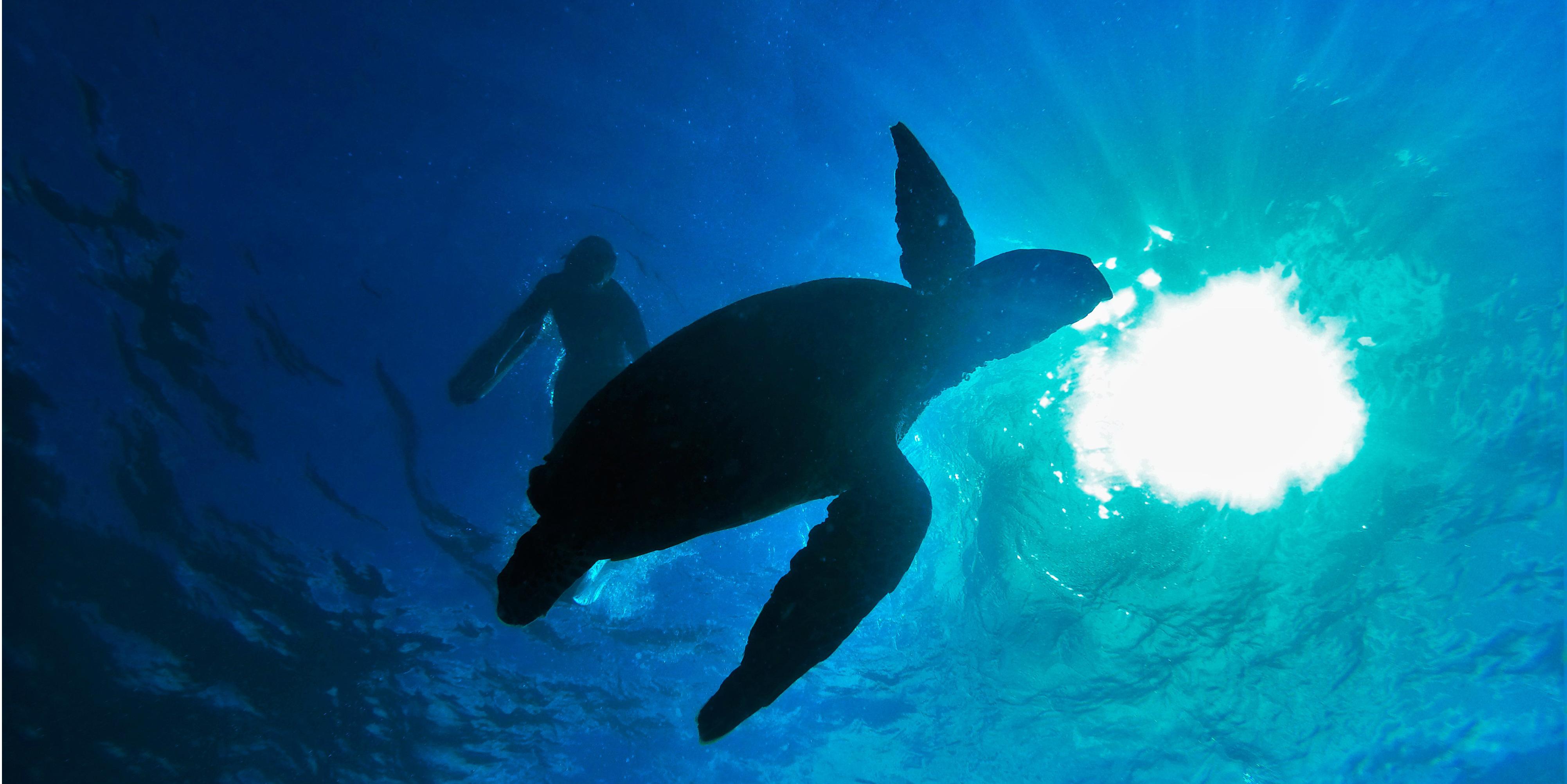 sea turtles endangered