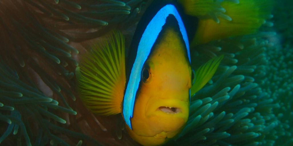 marine conservation