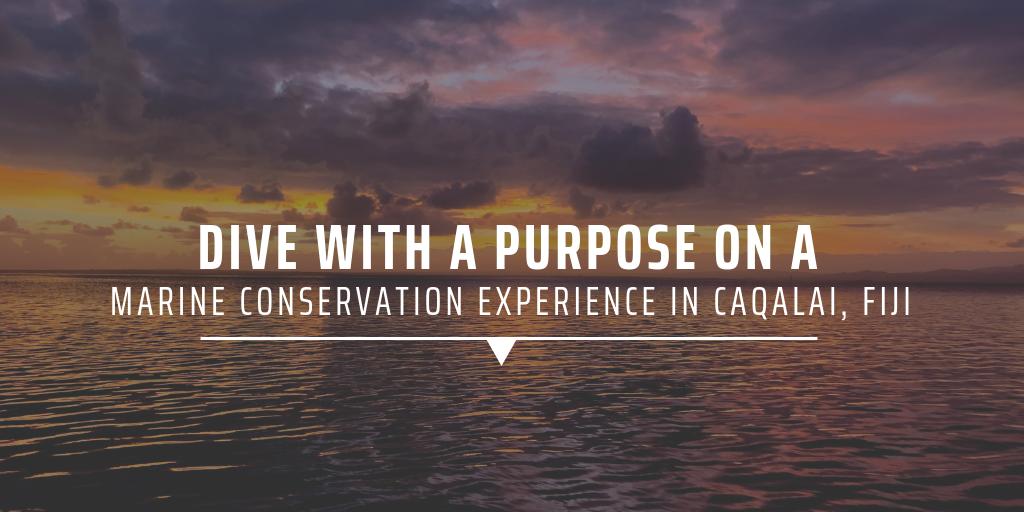 marine conservation volunteer abroad