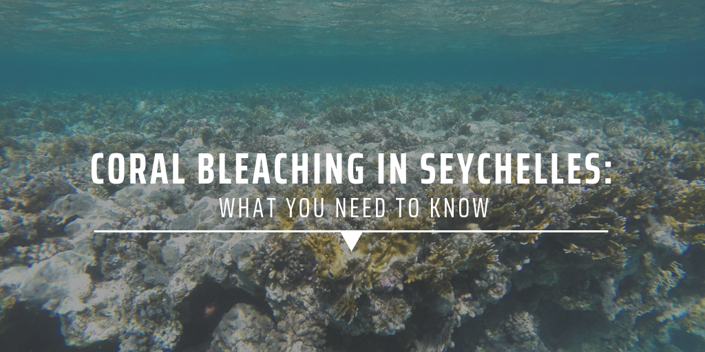 Coral bleaching in Seychelles What you need to know