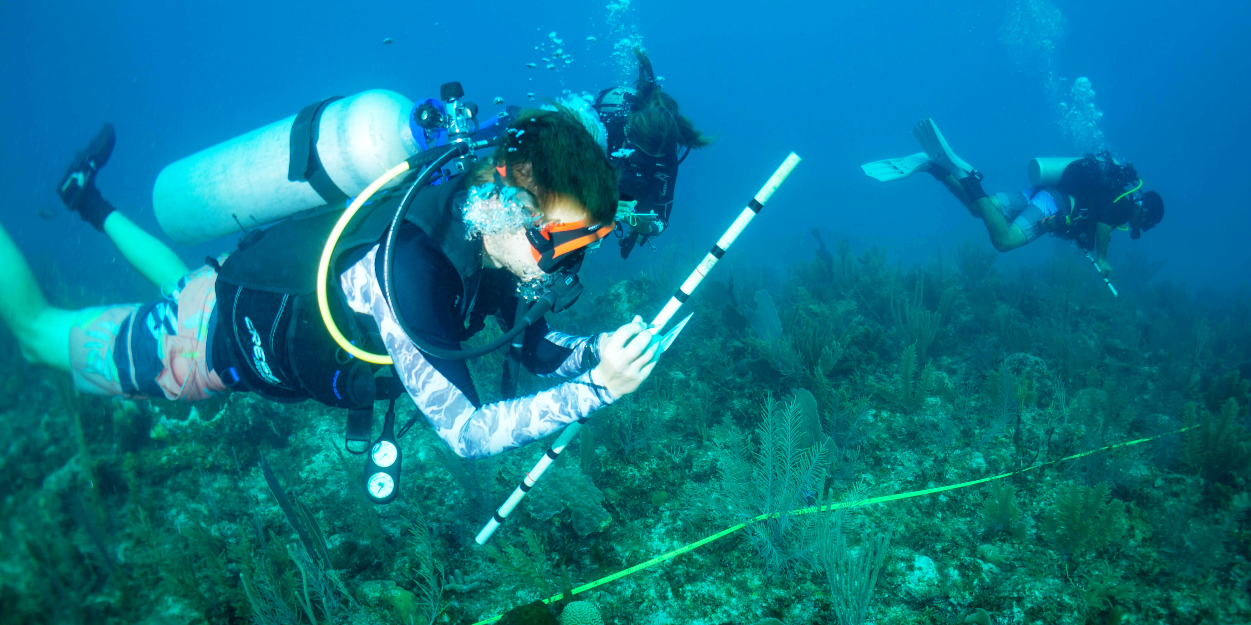A GVI participant records information on marine species along the Mesoamerican Barrier Reef System. This data is used to inform marine conservation research in the region.