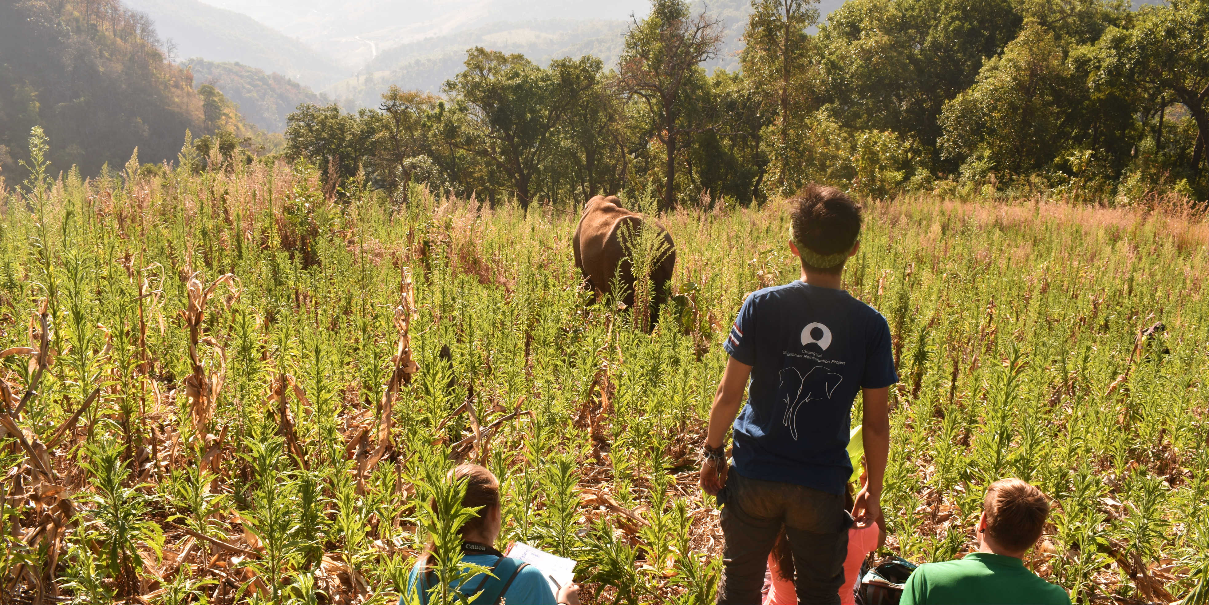 GVI participants monitor elephants in Thailand, as part of efforts to set up alternative elephant tourism.