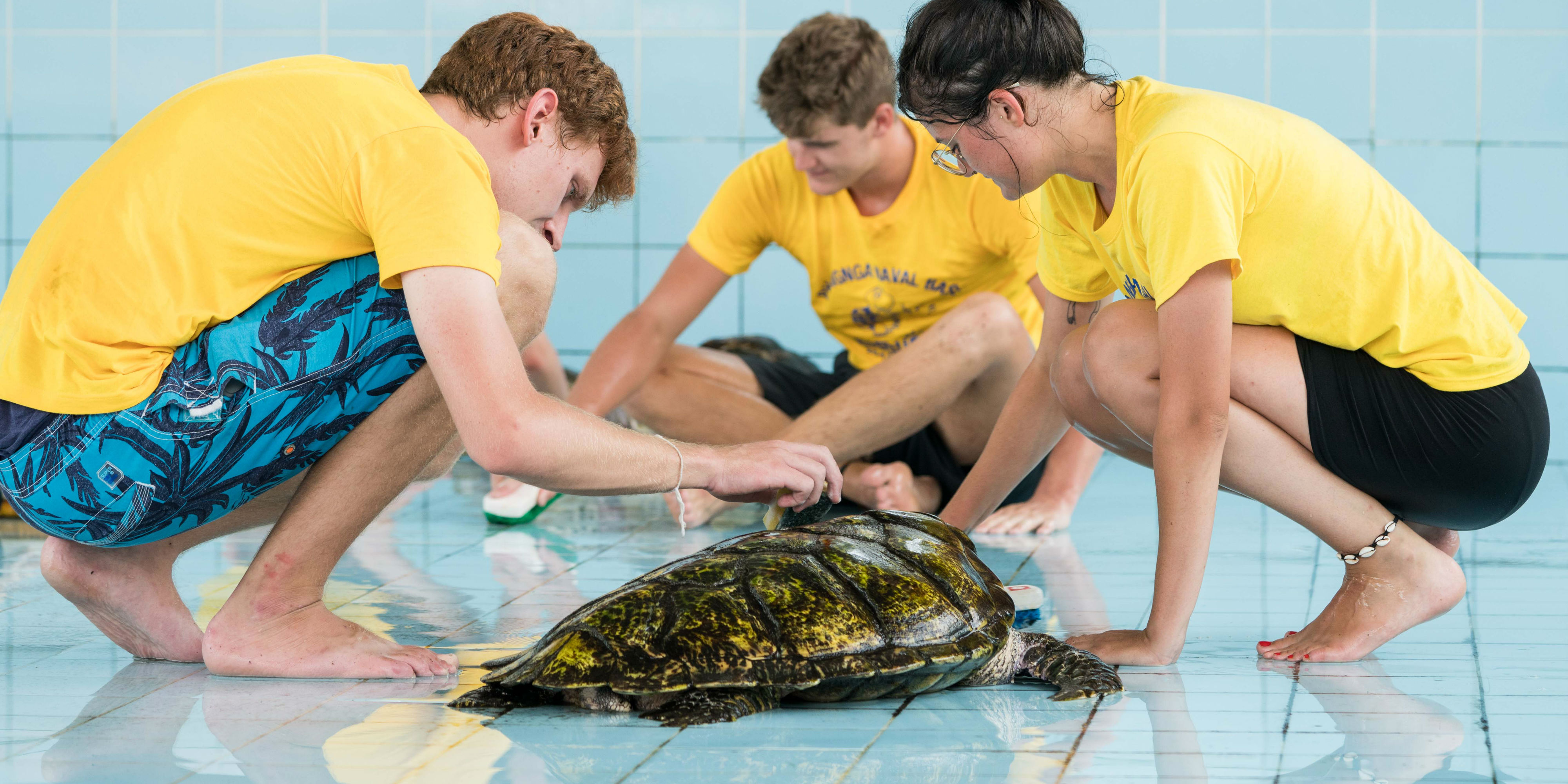 Participants carefully scrub the tank, and shell of a turtle   donate or volunteer