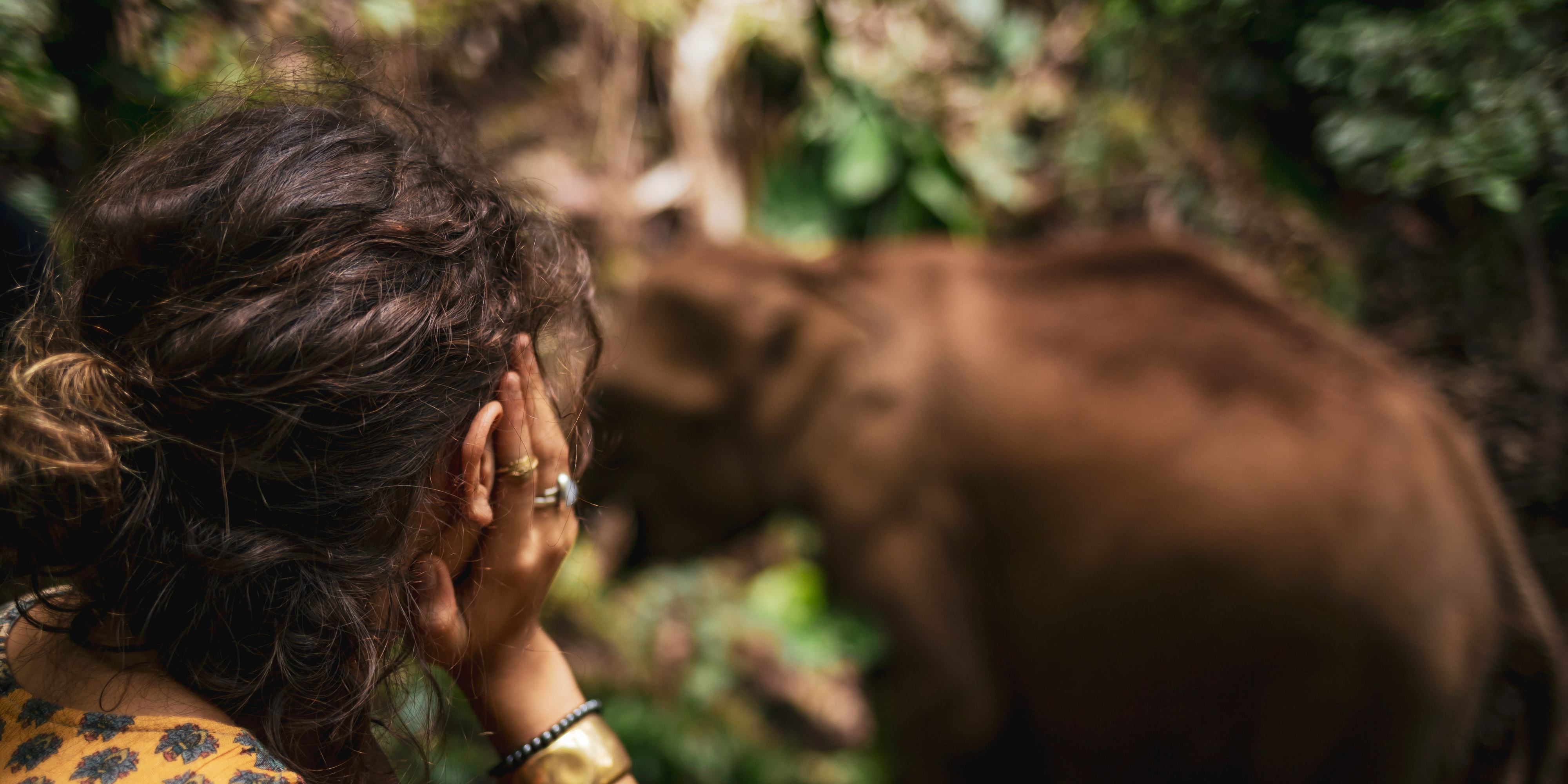 A GVI participant observes an elephant in the forest. The forests of Chiang Mai are the best place to visit elephants in Thailand.