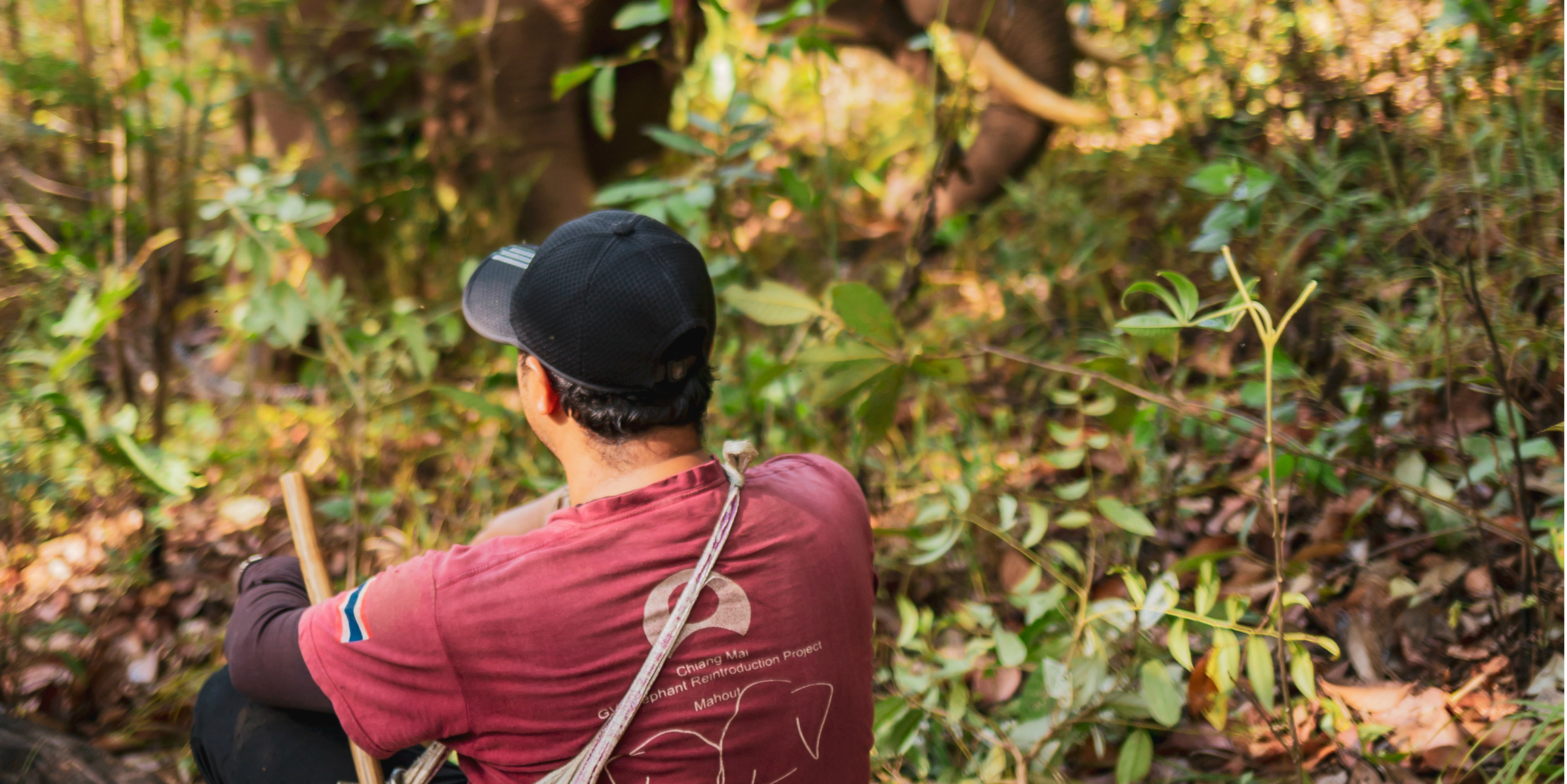 A traditional elephant keeper observes his elephant in the hills of Chiang Mai, as part of a volunteer in Thailand with elephants program.