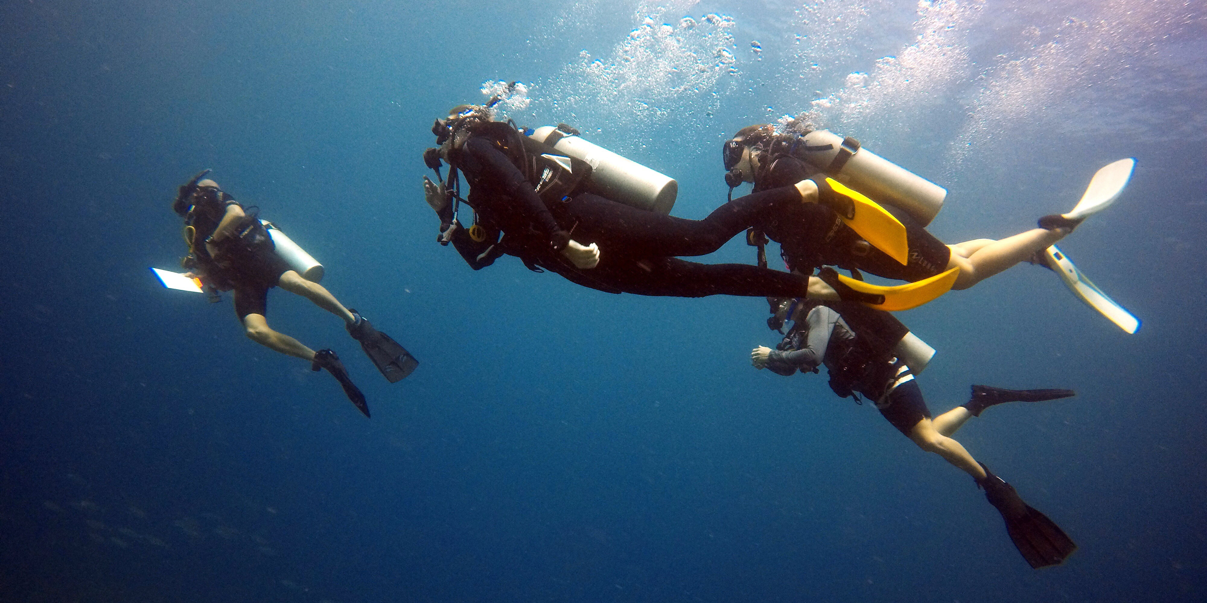 Four divers complete coral reef research while on a gap year travel program with GVI.