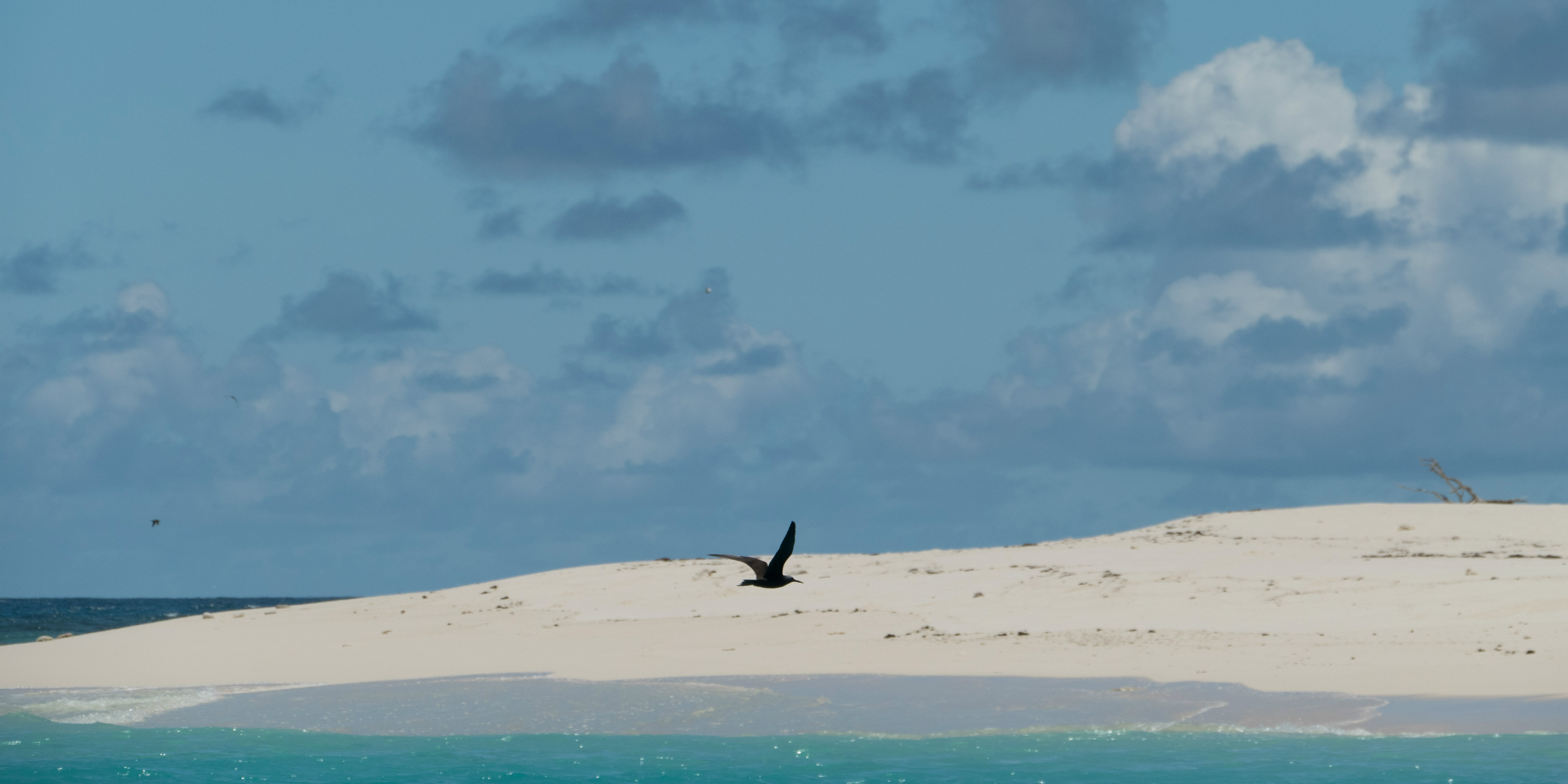 A bird glides gracefully on Bird Island, in the Seychelles archipelago home to many conservation projects.