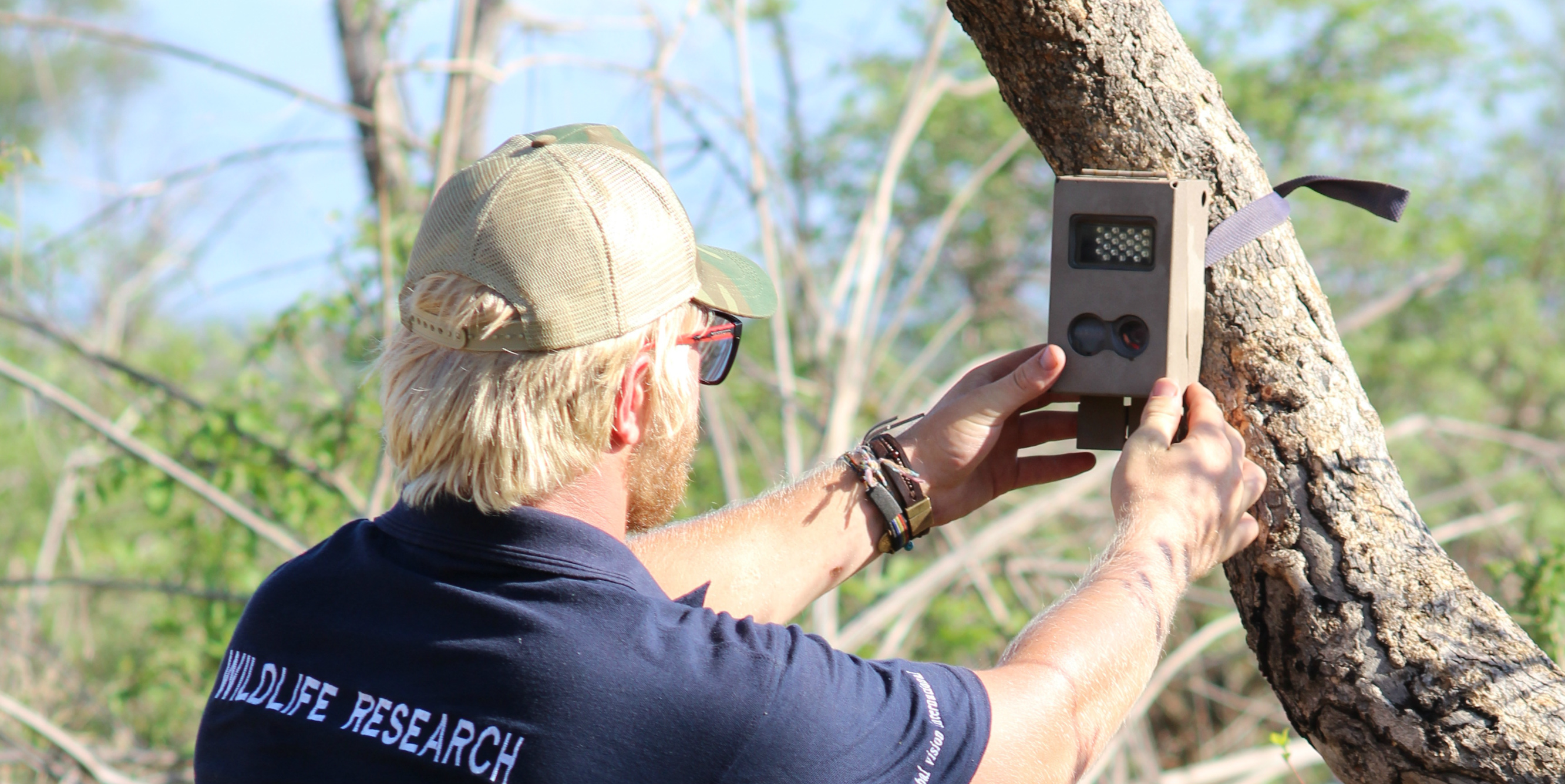A GVI wildlife conservation participant sets up a camera trap to record animal sightings.