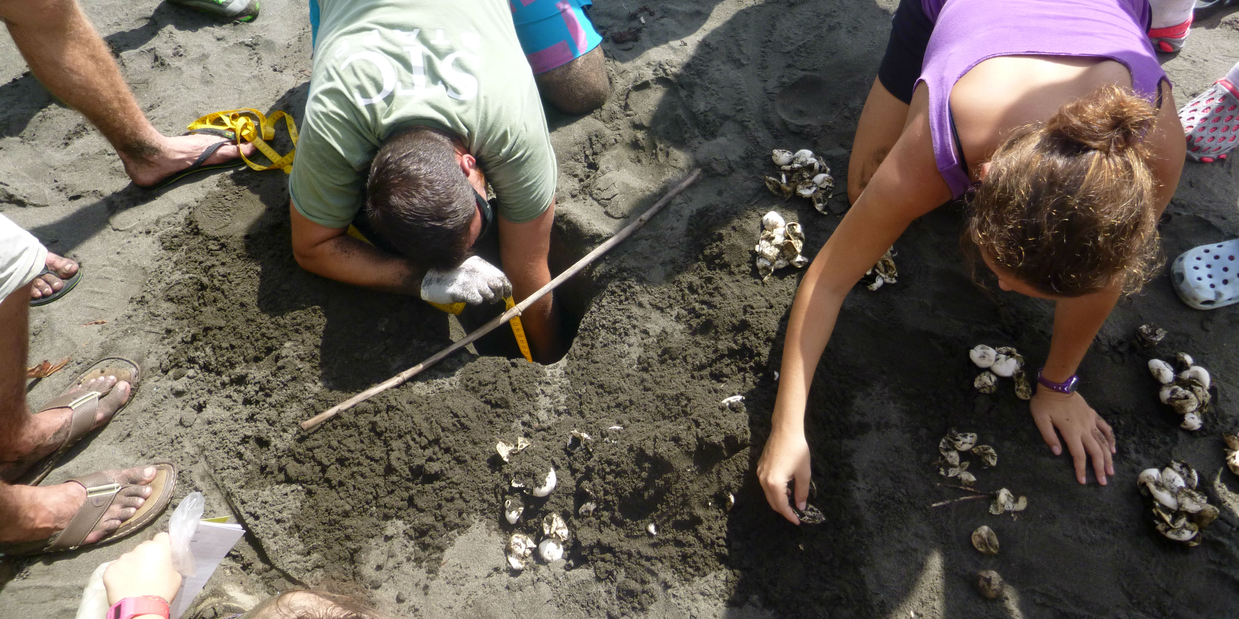 GVI particpants take part in sea turtle conservation by excavating sea turtle nests to determine hatching success rate.