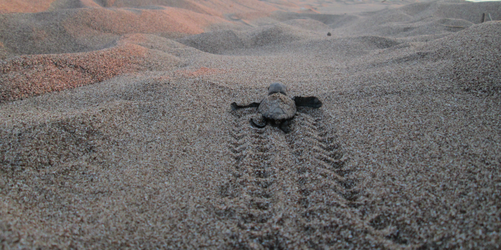 Volunteer in Thailand and you could assist in the release of young turtles into the ocean.
