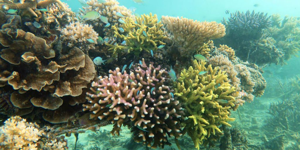 The reef assessment showed what the reef was composed of and how many species were present.