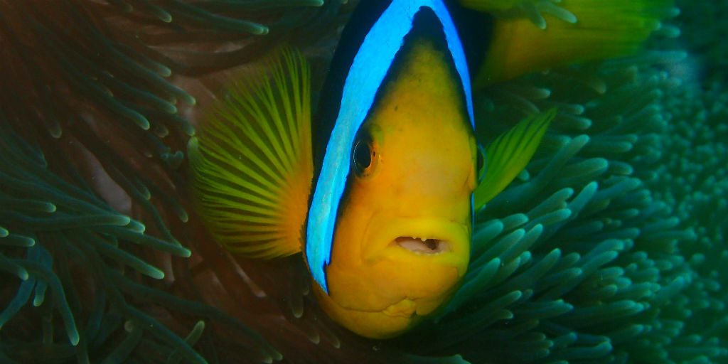 Snorkeling and diving are high on the Fiji must do list, join us on a GVI marine conservation program to see for yourself.