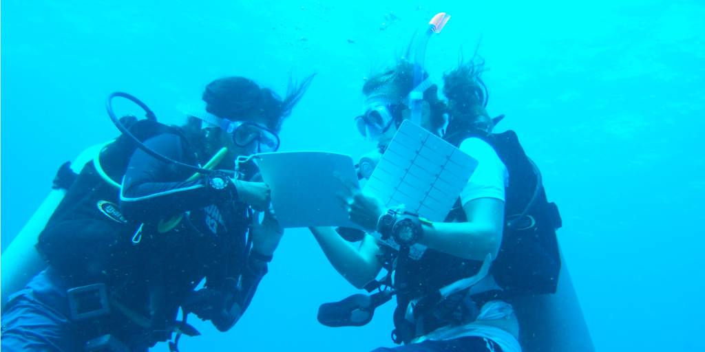 Spend your adult gap year scuba diving