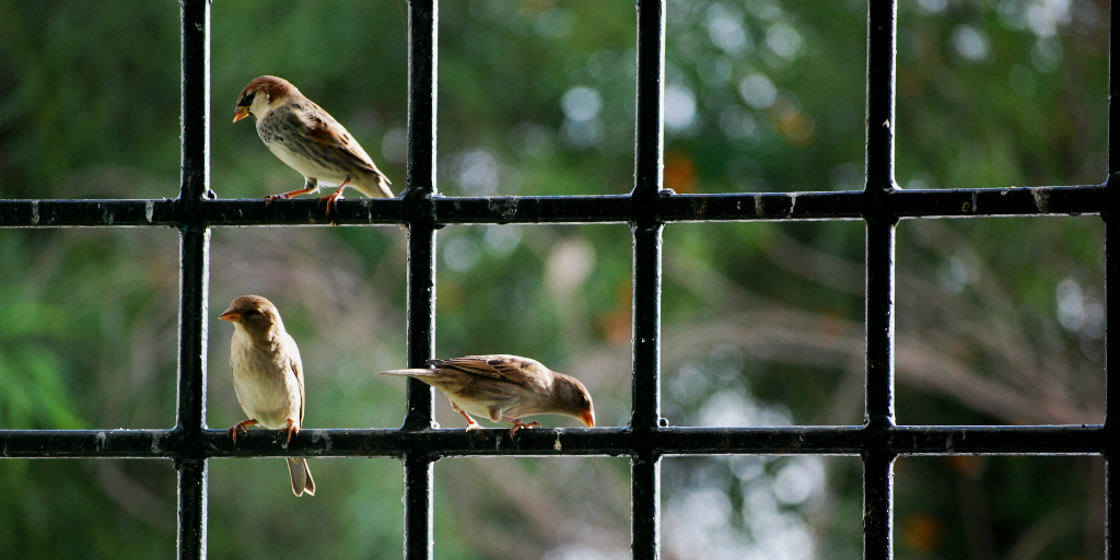 Glass windows have a negative environmental impact on birds