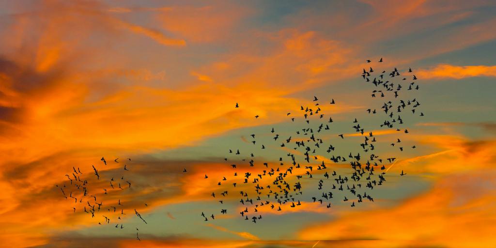 Light pollution can impact bird migration