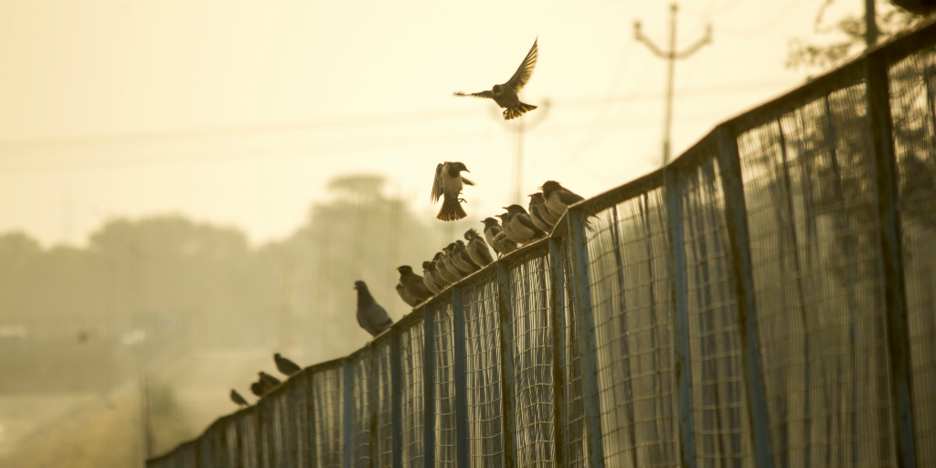 Noise pollution has a negative impact on birds