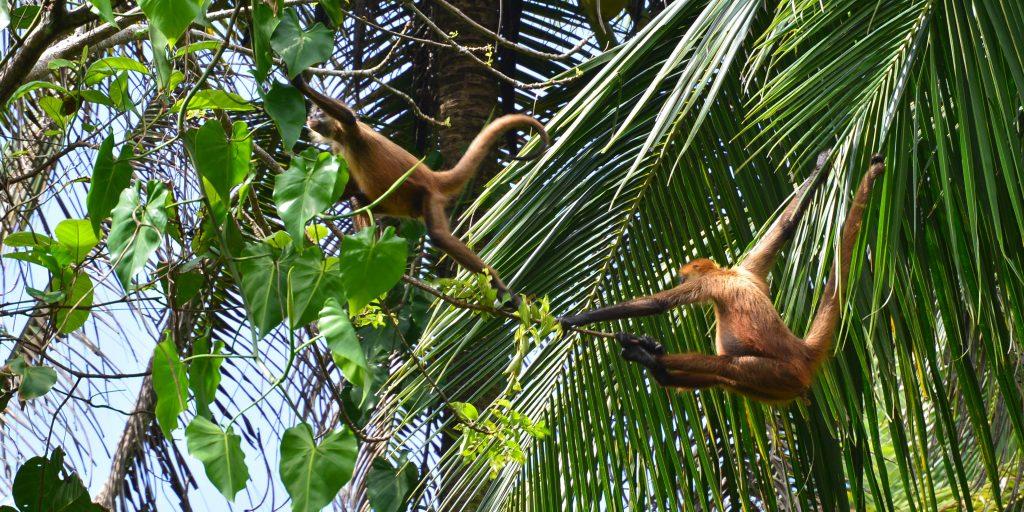 Wildlife in Costa Rica include monkeys.