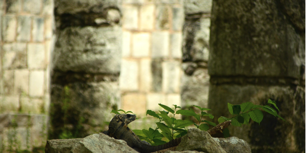 A lizard clambering over rocks at a Mayan temple site in Cancun.