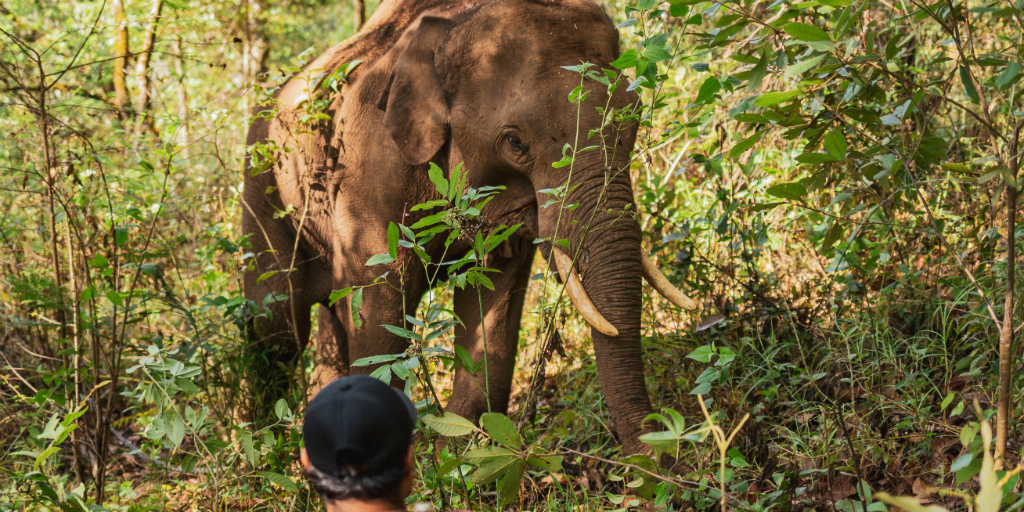 A volunteer sitting in the forest watching an elephant at a distance