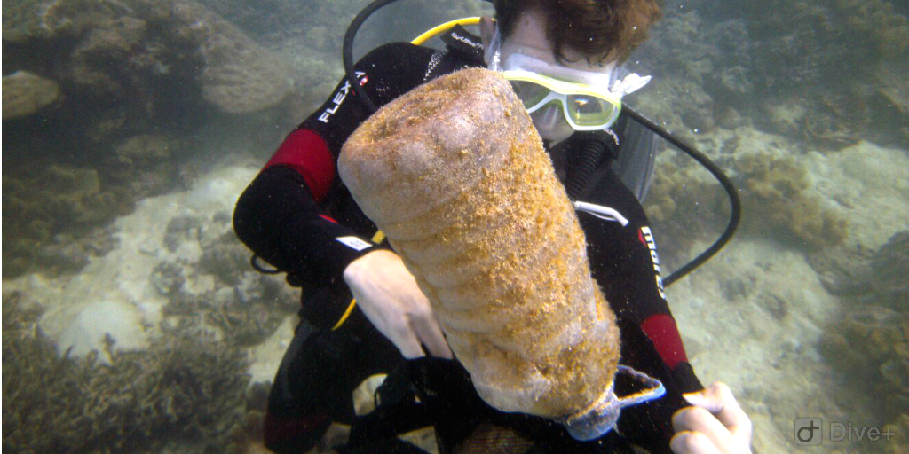 A diver retrieving a large plastic bottle covered in algae from the ocean bed.