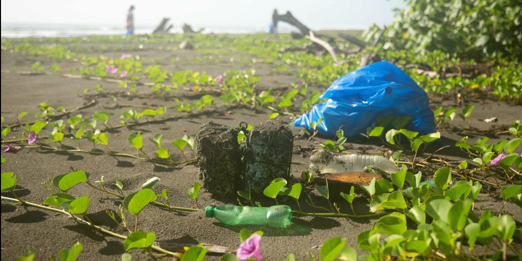 A variety of litter lying amongst the vegetation on a beach.