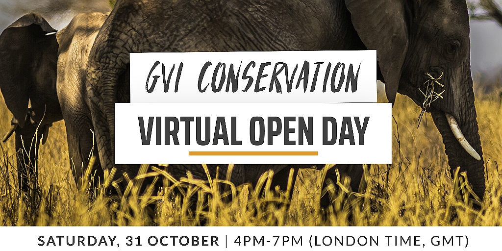 Learn more about GVI, and what it's really like to volunteer abroad or pursue a career in the conservation field during our Conservation Global Digital Open Day.
