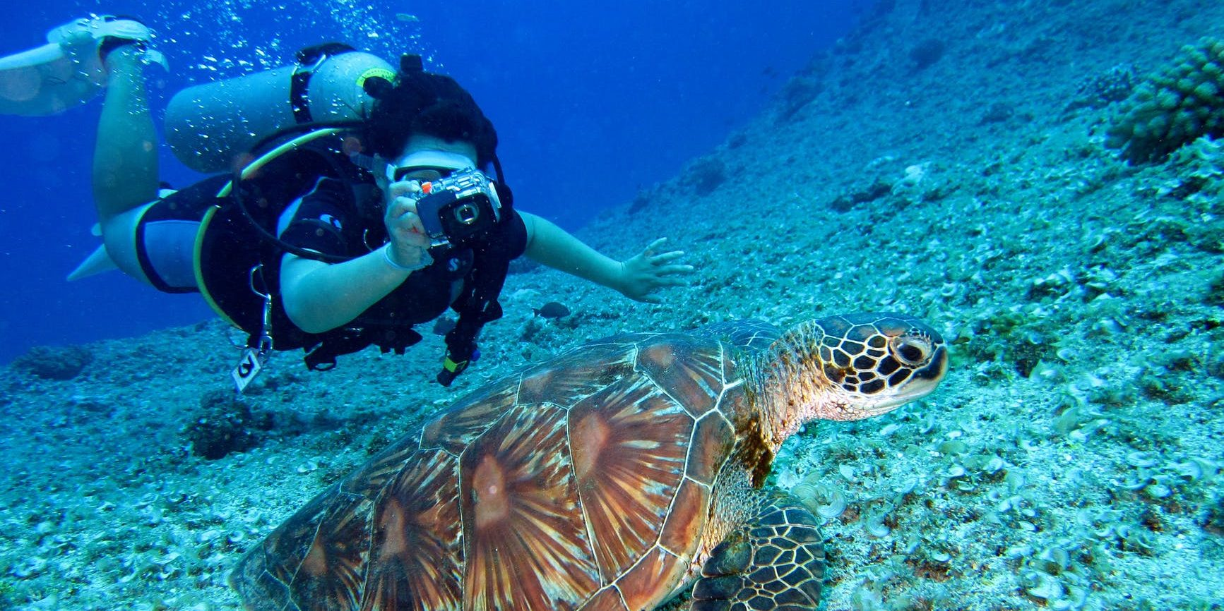 A diver takes a photograph of a swimming sea turtle