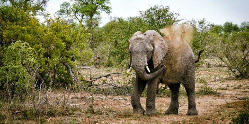 volunteer towards elephants in Africa