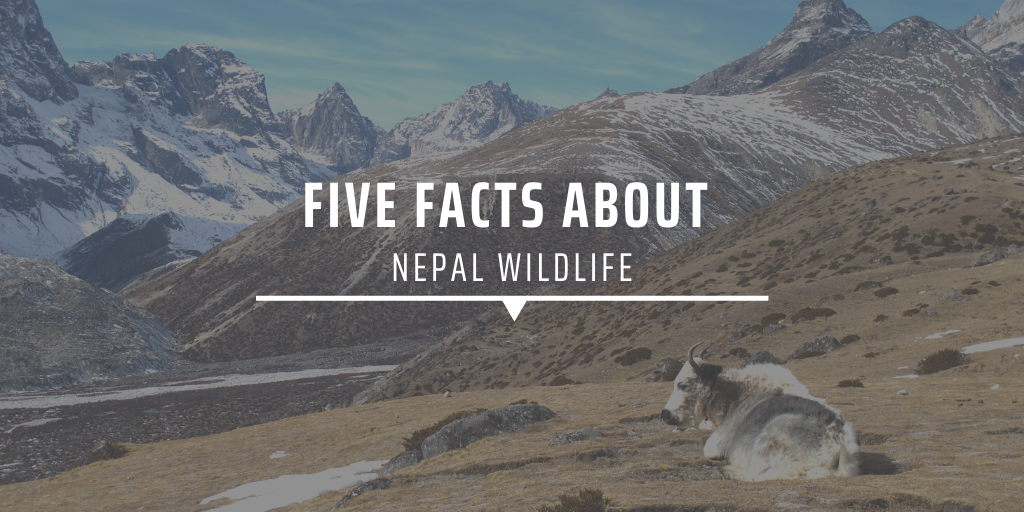 Five facts about Nepal wildlife